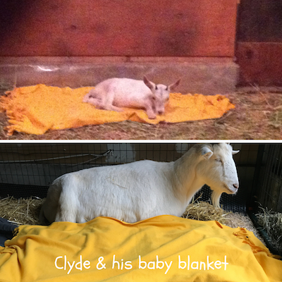 Clyde__his_baby_blanket_02_400.png